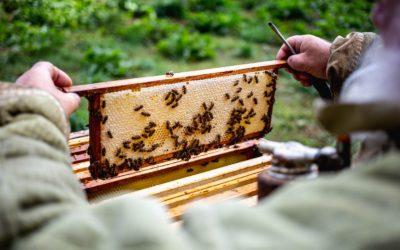 Hoe komt de honingbij de winter door?