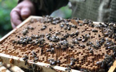 Bijensafari van april tot september