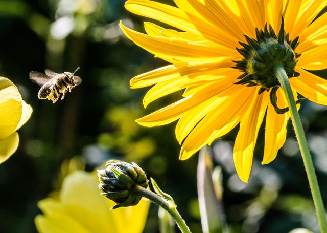 Hoe gaat het met de bijen als het zo warm is?